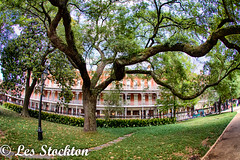 20170423_13581801_HDR.jpg (Les_Stockton) Tags: frenchquarter hdrefex highdynamicrange neworleans hdr tree vacation louisiana unitedstates us
