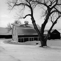 Barn with Cottonwood, Washington (austin granger) Tags: barn cottonwood washington palouse snow winter morning cold rural farm square film gf670