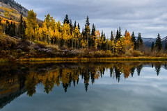 Natural Symmetry (Robin-Wilson) Tags: fallcolors reflection aspentrees pinetrees colorado snow dusting ashcroft