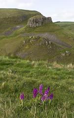 Early Purple Orchids (l4ts) Tags: landscape derbyshire peakdistrict whitepeak earlypurpleorchids wildflowers cressbrookdale cressbrookdalenationalnaturereserve limestone limestonedale grassland petersstone