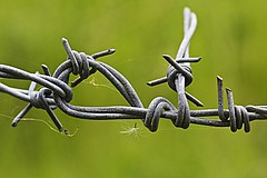 Barbed (jeansinclair1) Tags: wire barbedwire spidersilk dandelionseed 52in2017challenge 26twist