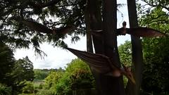 Jurassic Kingdom - Birmingham Botanical Gardens - Pterosaurs - HD video clip (ell brown) Tags: westbournerd edgbaston birmingham westmidlands england unitedkingdom greatbritain birminghambotanicalgardens botanicalgardens jurassickingdom dinosaur welicreative tree trees video videoclip hdvideo hdvideoclip pterodactyl pterodactyls pterosaur pterosaurs