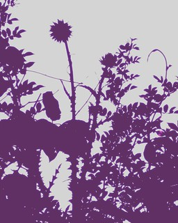 Thistle contrast