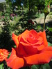 IMG_3322 (reuse) Tags: mayflowers