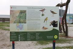Infotafel am Infozentrum (perspective-OL) Tags: stad stadland sehefelder moor schwimmendes national park nationalpark nordsee jadebusen watt watvögel sehestedt deich