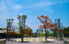 JARDINES DE MEXICO (fco_galan34) Tags: jardines mexico naturaleza natural morelos paisajismo ecosistemas flores colores plantas arboles jabachines plaza plazoleta