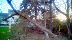 Springtime evening - TMT (Maenette1) Tags: spring evening trees backyard house grass birdfeeder sunshine menominee uppermichigan treemendoustuesday amazonfirehd