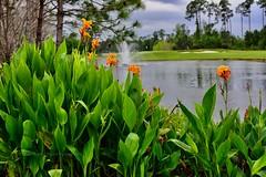 Back Nine (taylor.michaelj) Tags: mjt nikon d810 50mm florida golf outdoor landscape orlando