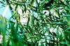 _DSF5010 (ad_n61) Tags: mayofujifilm xt1 fujinon super ebc xf 18135mm 13556 ois wr zaragoza flores amarillo naranja lolita morado violeta verde azul tierra primavera españa