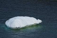 Floating in Green (Clif Budden) Tags: 2017 april canada cold ice iceberg nl nature newfoundland outdoors saturday
