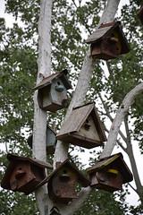La Campagna in Città (Colombaie) Tags: farrara gita emiliaromagna città turismo turisti visitare campagnaincittà certosa cooperativa agricola agricoltura allevamento biologico ecologia bambini nidi recuper overde pubblico benecomune albero