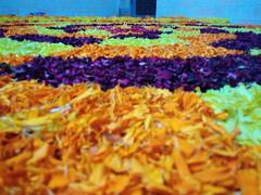 IMG_20160913_040203 (bhagwathi hariharan) Tags: onam pookalam flower rangoli kolam carpet floral nalasopara nallasopara virar aathapookalam tiruonam