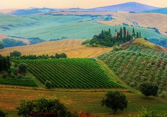 Val d'Orcia Tuscany (Rex Montalban Photography) Tags: rexmontalbanphotography tuscany italy poderebelvedere valdorcia