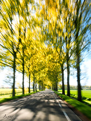 Hurry hurry hurry !!!! (Wilma van Oorschot) Tags: wilmavanoorschot angelphotography olympusem5 olympusomde5 olympus mzuikodigitaled1250mm13563 trees speed colors movement nature outdoor
