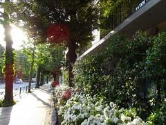 DSC01248 (Yasuko_) Tags: tokyo green