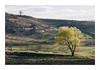 Untitled Image (Florin Aioanei) Tags: trees duality treeoflife landscape nature romania florin aioanei