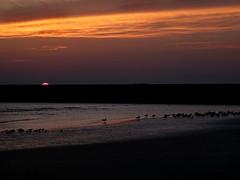 Darkness as Sun Goes Down (Clare-White) Tags: seascape sony night silhouette sun seaside light sea water strand waves darkness seagulls nederlands beach tip sundown birds ijmuiden pier orange evening