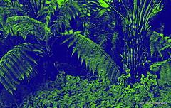 Jungle (Rollingstone1) Tags: vegetation jungle plants green illusion flora dense fever art overgrown land abstract texture