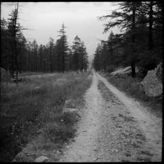 pian dell'Azaria (Robignuud) Tags: film 6x6 valsoana blackandwhite voigtlander bessa skopar campiglia