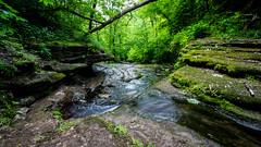 4444 (cleotalk) Tags: jessamine county ky kentucky gorge trail creek overstreet deer woods hiking
