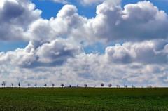 Landschaft (Wunderlich, Olga) Tags: bäume baumreihe wolken landschaft natur rügen deu blau nature landscape getreide mecklenburgvorpommern