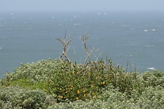 Fort Funston - 050617 - 10 (Stan-the-Rocker) Tags: stantherocker sony ilce sanfrancisco fortfunston ggnra nps sel55210
