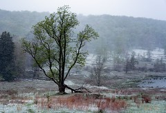 Canaan Valley (rickhanger) Tags: nature landscape snow tree canaanvalley westvirginia snowing