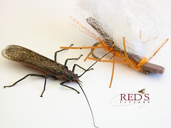 Salmon Race2 (Red's Fly Shop) Tags: flyfishing salmonfly stonefly yakimariver salmonflyhatch entomology
