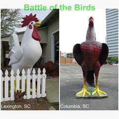 Battle of the Birds (KevinB 87) Tags: lexingtonsc columbiasc chicken giant gamecock sports