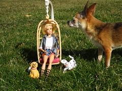 R U My mommy? (flores272) Tags: toy dog toydog toys doll dolls barbiedoll barbie barbiefurniture outdoors baylee eggchair barbiedog barbieclothing dollclothing barbiebobbinbowwow hannahmontana