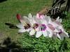 IMG_3319 (reuse) Tags: mayflowers