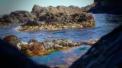 Littoral Rocheux (Astral Eye) Tags: rocher caillou nature eau mer plage naturel littoral mare marée extérieur