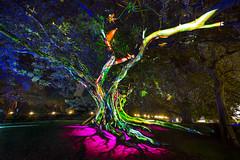 Vivid Sydney 2016 (Royal Botanic Gardens Sydney) Tags: vs2016 vsrbg2016 billboard vividsydney sydney artandculture eventsandfestivals events royalbotanicgarden parks annawarr nature trees nsw australia