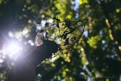 Corazón que siente la naturaleza (Conserva tus Colores) Tags: conservatuscolores chile bokeh naturaleza naturelovers lovenature love rayosdesol luznatural canon originalphotographers hojassecas