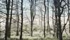 Forest (Pieter Musterd) Tags: bos sollelveld loosduinen photoshop nik pietermusterd musterd canon pmusterdziggonl nederland holland nl canon5dmarkii canon5d