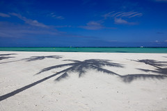palm trees (mariola aga) Tags: puntacana dominicanrepublic atlanticocean vacation summer beach shoreline white sand turquoise water blue sky palmtrees shadows wideangle juanilloplaya thegalaxy