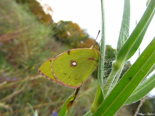 Butterfly 1245