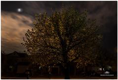 MAY 2017 NM1_3799_029-22 (Nick and Karen Munroe) Tags: nightsky nighttime nightphotography nightshots night afterdark moon moonlit moonlitsky moonrise moonshot moonshots fullmoon luna lunar sky clouds cloudy cloud landscape trees tree beauty brampton beautiful canada colour color colors ontario outdoors nikon nickandkarenmunroe nickmunroe nature nikon2470f28 nickandkaren nikond750 karenick23 karenick karenandnickmunroe karenmunroe karenandnick munroedesignsphotography munroedesigns munroephotography munroe weather spring springtime newgrowth