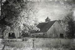 fanciful cupola (David Sebben) Tags: black white barns cupola iowa texture monochrome