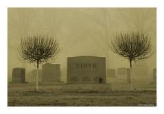 Tree Up (TooLoose-LeTrek) Tags: cemetery fog haze mist monotone gravestone tree headstone