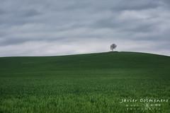 El Solitario. (Javier Colmenero) Tags: alava araba arzubiaga nikon nikond7200 arbol landscape vitoriagasteiz euskadi españa es