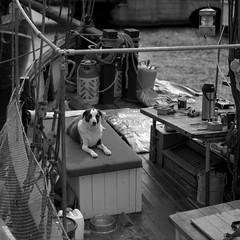 Nyhavn (ss9679) Tags: 500cm 120 fp4 dog hasselblad copenhagen nyhavn zeiss sonnar cf 150mm f4 ilford pushedfilm square mediumformat 6x6 blackandwhite denmark danmark københavn boat water film analog 400 hc110 kodakhc110 epson4180 telephoto 149 mittelformat filmdev:recipe=11348 ilfordfp4125 film:brand=ilford film:name=ilfordfp4125 film:iso=400 developer:brand=kodak developer:name=kodakhc110