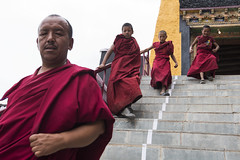 Monks at Thiksey Gompa (Ravikanth K) Tags: 500px monks thicksey monastery gompa buddha buddhist red leh ladakh jammuandkashmir india people steps climbingdown running activity streetphotography travel outdoor kids adult fun