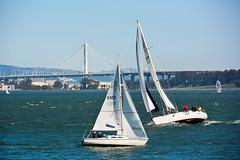 Day 126 ~ Sailboats n the San Francisco Bay (champbass2) Tags: day126 day126365 3652017 2017 sanfrancisco sanfranciscobay baybridge sailboat