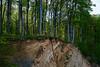 Jasmund National Park / Rügen (Sebastian Warneke) Tags: 2017 insel jasmund landschaft nationalpark natur sebastianwarneke fujinon 35mm f14 rügen ruegen rugen fuji fujifilm xt2