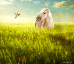 Just Me And Thee... (rubyblossom.) Tags: angiesanimalantics challengeno16 equine horse pony field meadow bird friend rubyblossom rubystreasures 2017 hummingbird