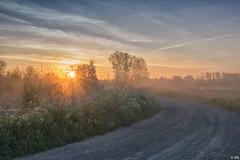 Sunrise (Martine Lambrechts) Tags: sunrise fog misty flower landscape nature