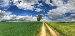 Wolken über dem Schwabenland (Blende2,8) Tags: badenwürttemberg reutlingen wolken himmel felder baum weg feldweg