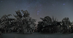 Frozen pines and Winter Milky Way  ll, Crimea (Mike Reva) Tags: astronomy astrophoto astrophotography astro stars sky stargazing snow stillness samyang24 starrynight night nightsky nghtsky nightscape ngc nights constellations countryside crimea canon6d