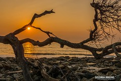 Driftwood Beach Sunrise (The Suss-Man (Mike)) Tags: atlanticocean beach driftwood driftwoodbeach georgia glynncounty jekyllisland nature ocean rocks sky sonyilca77m2 sunrise sussmanimaging thesussman water